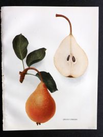 Hedrick - Pears of New York 1921 Fruit Print. Lincoln Coreless.